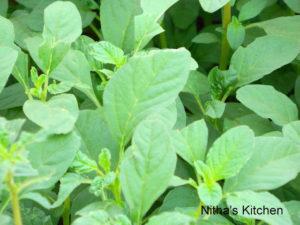 Amaranth Leaves Stir Fry | Siru Keerai Poriyal | Fresh n Organic :-)
