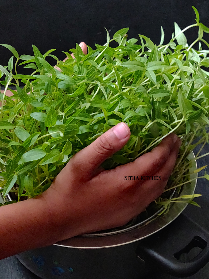 Moong Beans Microgreens  / Mung Beans micro greens video recipe
